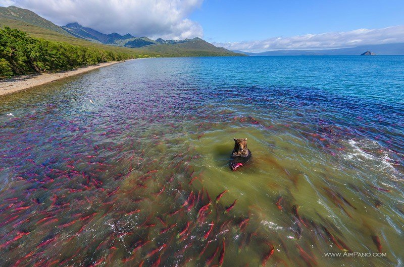 Airpano, Kurile Lake, Kamchatka, Russia - Bears